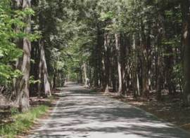 Tunnel of Trees; Harbor Springs, MI (courtesy of www.michigan.org)